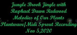 Jungle Brook Jingle with Raphael Dawn Redwood