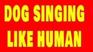 Singing Dog Chippy Dog Sing Like a Human