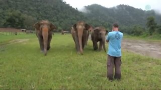 A Man Calls Elephant's In Different Angle they Came Near to Him