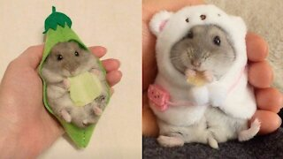 Funny and Cute Hamster Compilation 🐭