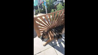 Puppy Toby with adopted mum Pandora having a chilling outside