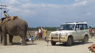 Elephant tows car in India