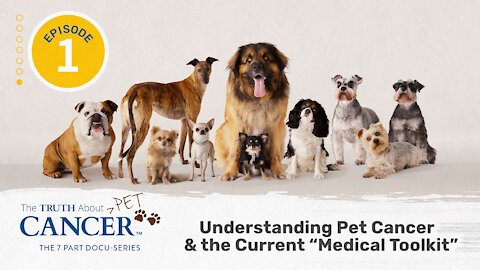 """Episode 1 of The Truth About Pet Cancer   Understanding Pet Cancer & the Current """"Medical Toolkit"""""""