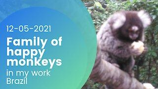 Family of happy monkeys - 12-05-2021