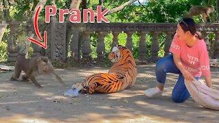 Fake Tiger Prank with Monkey So Funny