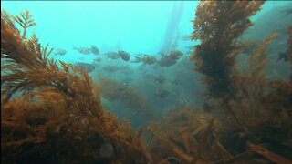 Being the Bestest Dive Buddy - Spotting Fish - Looking Out of my Dive Partner