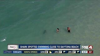 Sharks seen near swimmers on Florida's east coast