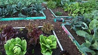 Part 18 Gardening When You Can't Buy or Sell