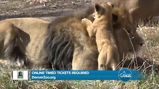 Denver Zoo // Come See The Animals Safely!
