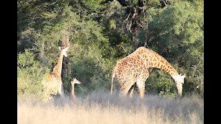 Kruger National Park, Part 2