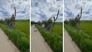 Men Fall Down While Attempting To Break Tree On Roadside