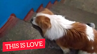 This is Love, Dog with Cat
