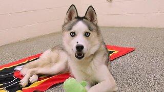Michigan Humane Society Telethon – Marvelous Medical