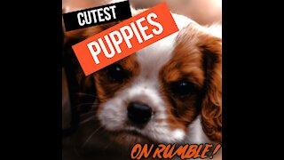 Cute Puppies #1