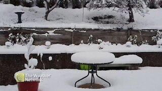 Fresh snow falling in B.C. backyard