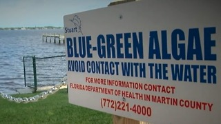 Concerns over blue-green algae being airborne