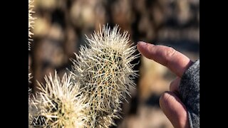 7 worst types of people in Arizona - ABC15 Digital