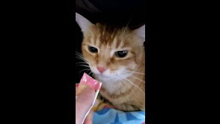 Cat angry eating