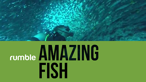 Discover the incredible world of amazing fish in this fascinating compilation!