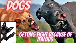 Dogs getting fight because of jealous1