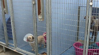 Animal Foundation expects hundreds of runaway pets spooked by fireworks