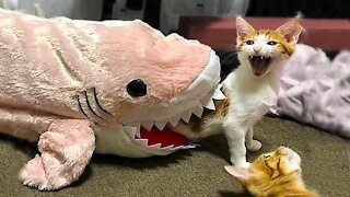Funny Cats and Dogs Compilation 2