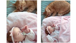 Cute cat is waiting for sleeping of Baby and taking care of baby