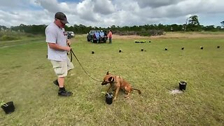 Dogs saving Florida's citrus trees from catastrophic disease