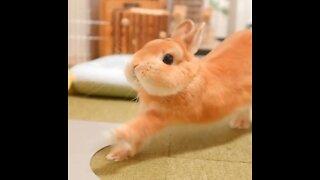 Cute rabbit 😍