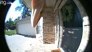 A Reptile Disruption: Nuissance Lizard Likes To Lick Doorbell