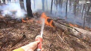 Un pompier sauve un kangourou des flammes en Australie