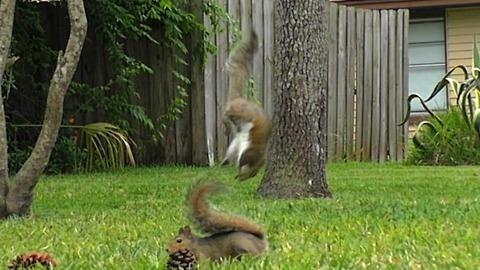 Squirrel Party **