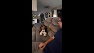 Basset Hound Puppy, Dinner Time!