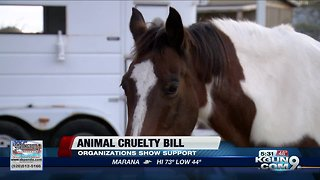 Local animal rescue organization reacts to bill against animal cruelty