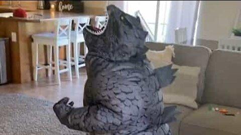 Rapaz mostra o seu melhor rugido de Godzilla