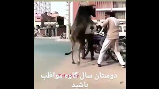 Must watch very funny video