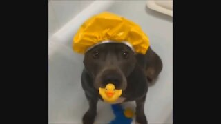 Cute Baby Animals Getting A Bath | Adorable Pets