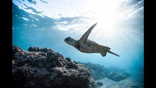 Marine life/Relaxing music/Animals
