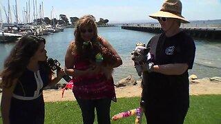 Exploring San Diego: Chula Vista HarborFest