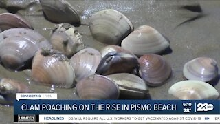 Clam poaching on the rise in Pismo Beach