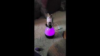 Kitten totally fascinated by vapor mist machine