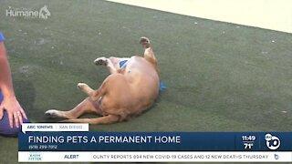 Pet of the Week: George