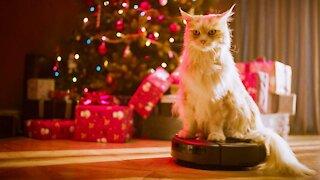Funny Cats vs Christmas trees 2020