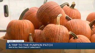 A trip to the pumpkin patch: Carmichael's