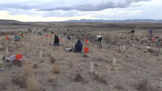 Volunteers help the BLM with a restoration project at Dedication Point