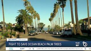 Residents seek injunction over planned tree removal in Ocean Beach