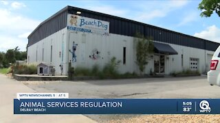 Delray Beach leaders to discuss new regulations for animal services