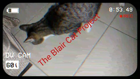 The Blair Cat Project