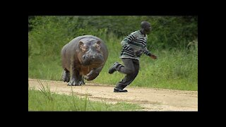 Looks so Funny Different Animals Chasing and Scaring People