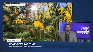 When's the best time to see fall foliage, and why the heck are some aspens brown?